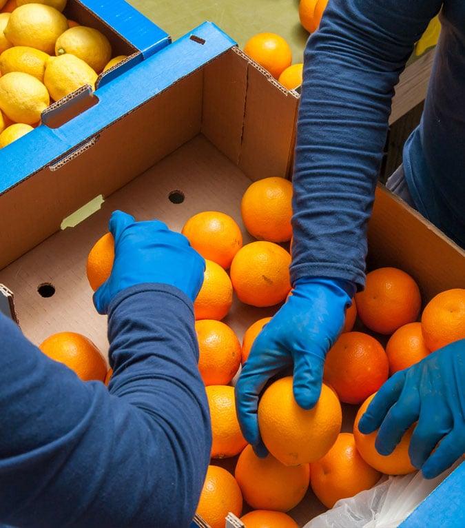 orange-boxes